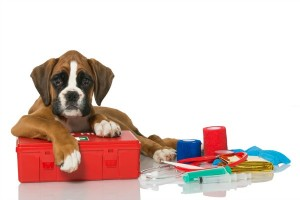 rp_puppy-with-first-aid-kit-300x200.jpg