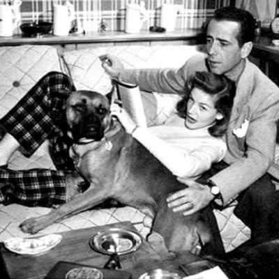 Hollywood, glamour et chiens