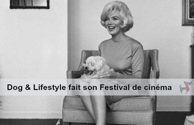 s_Hollywood Stars et Chien