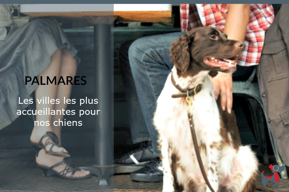 Palmares 2018 des villes dog-friendly