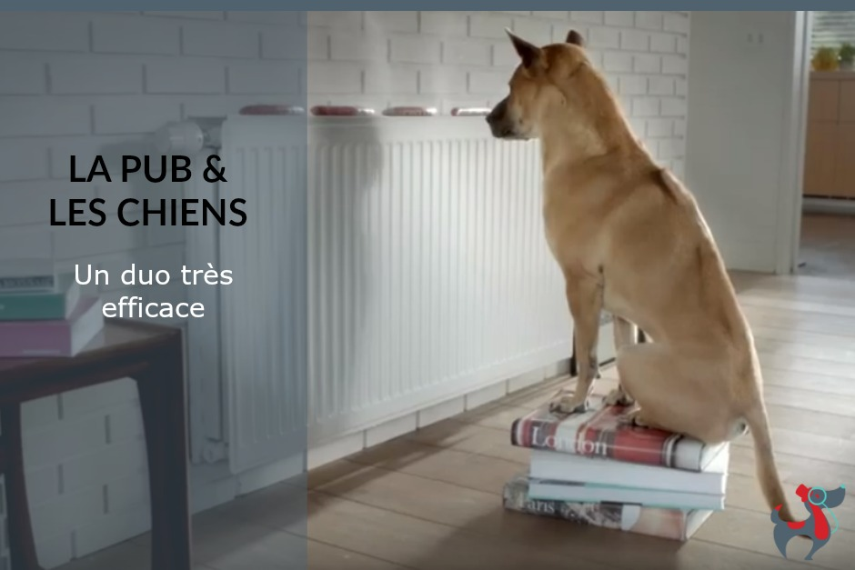 dog & lifestyle le magazine canin art de vivre ensemble