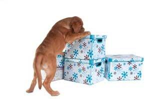 dog & lifestyle le magazine canin art de vivre ensemble