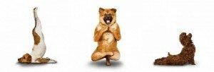 © Yoga Dogs™