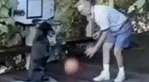 Chien jouant au basket