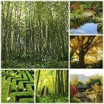 Bambouseraie d'Anduze: voyage au cœur du vert