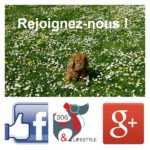 Dog & Lifestyle sur Facebook et Google +