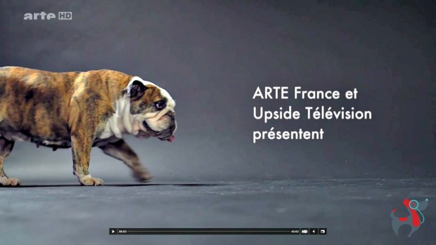 dog & lifestyle le magazine art de vivre ensemble