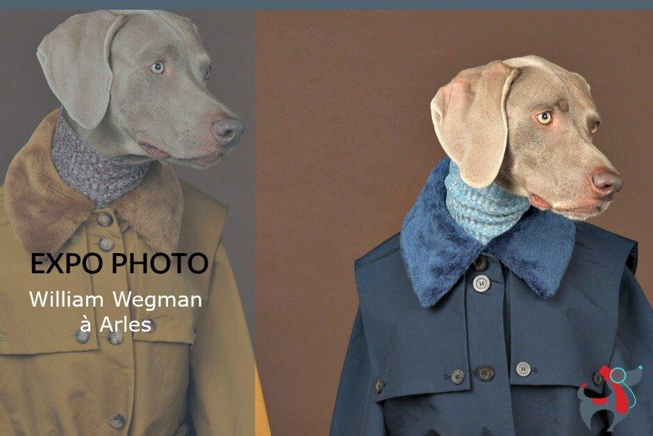 dog and lifestyle le magazine canin art de vivre ensemble