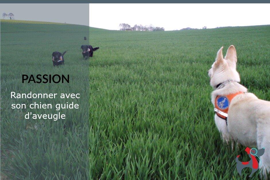 dog &lifestyle le magazine vitaminé des amateurs de chiens